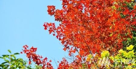 (4)12月3号勇登韶关云髻山,赏满山绝美枫叶-户外活动图-驼铃网