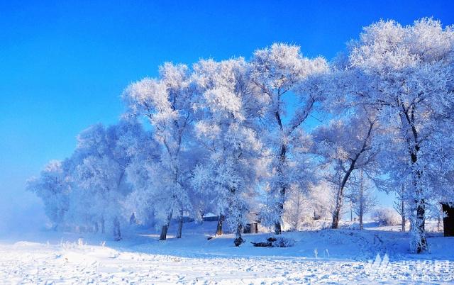 (21)冰雪纯玩游东北——哈尔滨-大雪谷穿越-爸爸去哪摄影基地-中国雪乡-魔界-长白山-雾凇岛赏雪7日游  -户外活动图-驼铃网