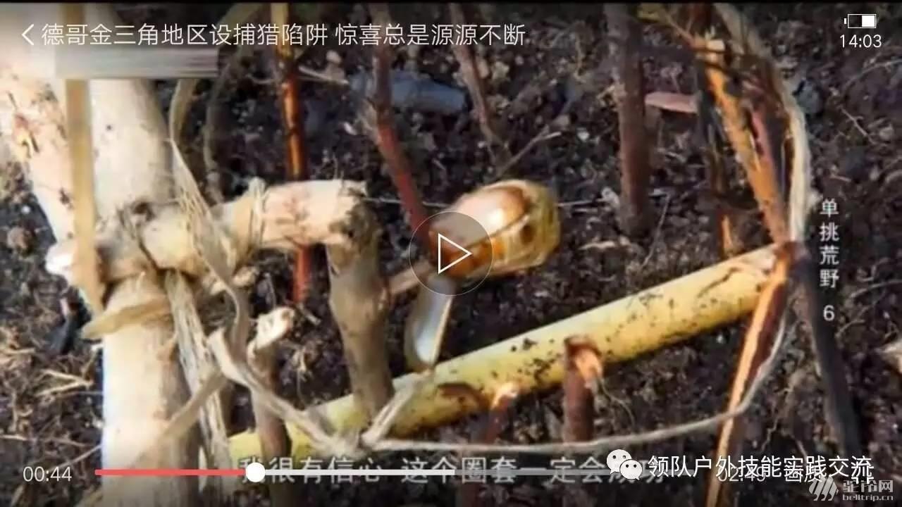 (15)12月3号野外生存之野外陷阱-户外活动图-驼铃网