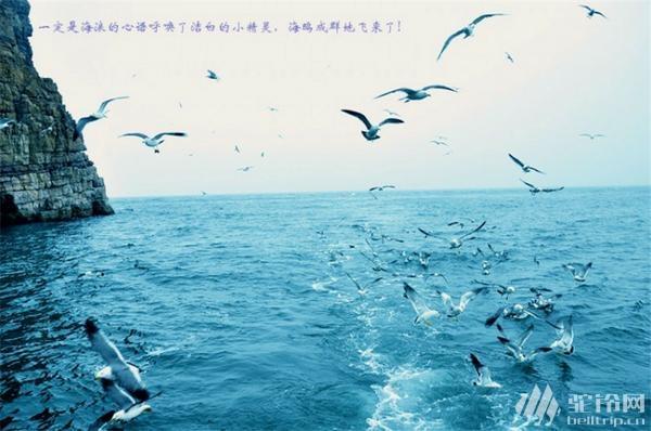 """(7)清明节?4.1-4日""""神奇海岛游""""长岛?万鸟岛?候叽岛?海豹苑!-户外活动图-驼铃网"""