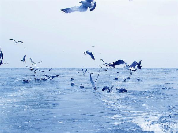 """(9)清明节?4.1-4日""""神奇海岛游""""长岛?万鸟岛?候叽岛?海豹苑!-户外活动图-驼铃网"""