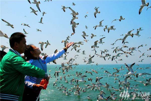 """(11)清明节?4.1-4日""""神奇海岛游""""长岛?万鸟岛?候叽岛?海豹苑!-户外活动图-驼铃网"""