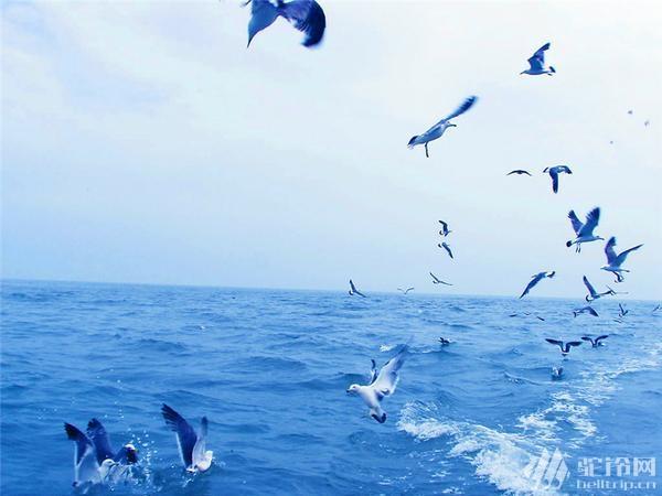 """(10)清明节?4.1-4日""""神奇海岛游""""长岛?万鸟岛?候叽岛?海豹苑!-户外活动图-驼铃网"""