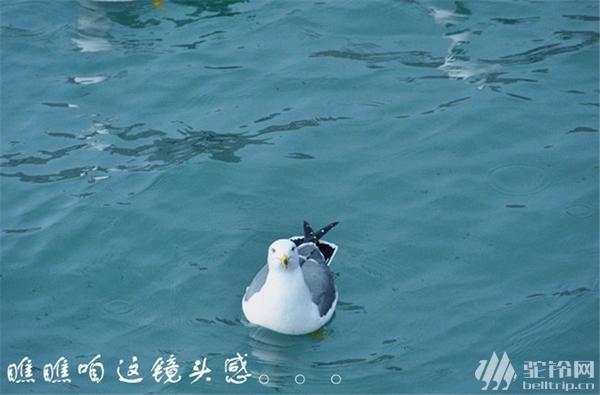 """(14)清明节?4.1-4日""""神奇海岛游""""长岛?万鸟岛?候叽岛?海豹苑!-户外活动图-驼铃网"""