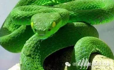 (1)三十八期 毒蛇咬伤处理与蛇草药识别-户外活动图-驼铃网