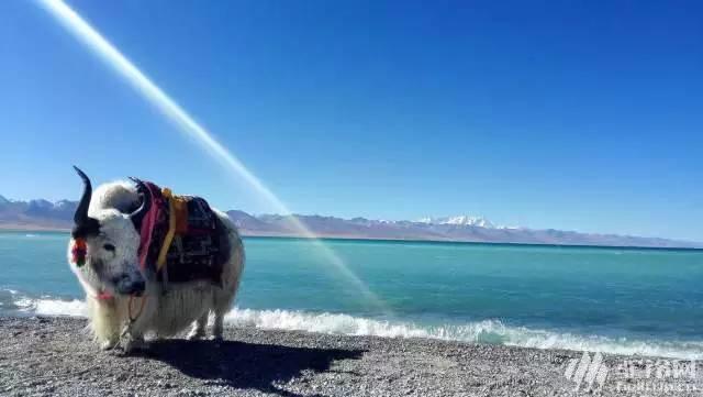 (19)醉美川藏线318珠峰大本营可可西里18日自驾游-户外活动图-驼铃网