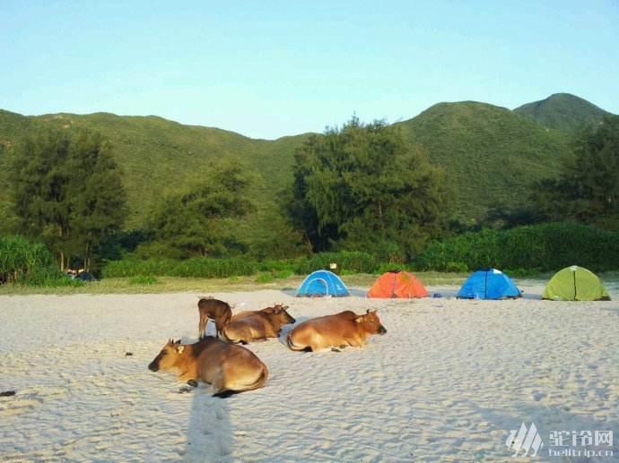 (6)广州出发香港醉美路线之麦理浩径精华段徒步 沙滩露营 游泳玩水 动车2天游-户外活动图-驼铃网