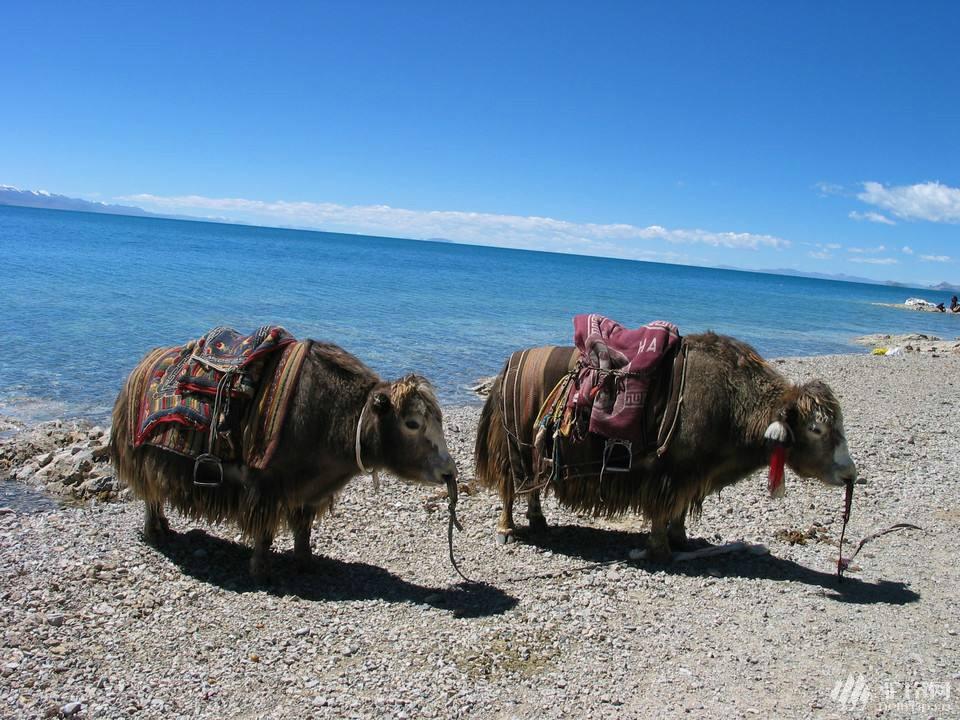 (36)真有22天的时间,你会去西藏吗?7月29号出发-户外活动图-驼铃网