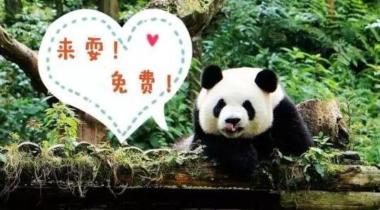 (3)雅安碧峰峡休闲一日游活动-户外活动图-驼铃网