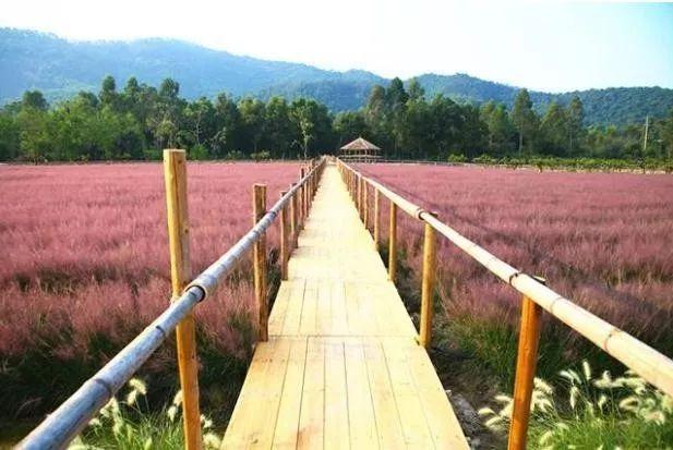 (7)(周日)秋日微风,红粉佳人徜徉在粉红田野,你约么?-户外活动图-驼铃网