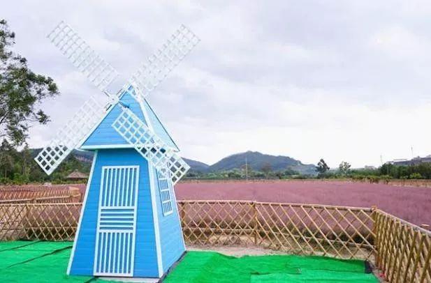 (9)(周日)秋日微风,红粉佳人徜徉在粉红田野,你约么?-户外活动图-驼铃网