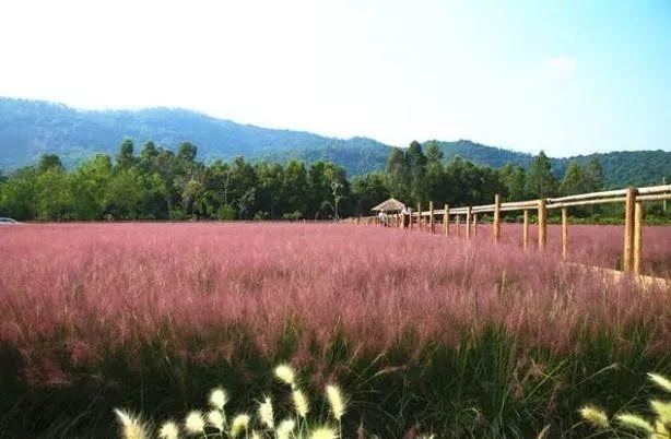 (10)(周日)秋日微风,红粉佳人徜徉在粉红田野,你约么?-户外活动图-驼铃网