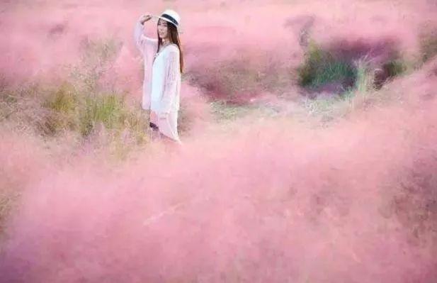 (3)(周日)秋日微风,红粉佳人徜徉在粉红田野,你约么?-户外活动图-驼铃网