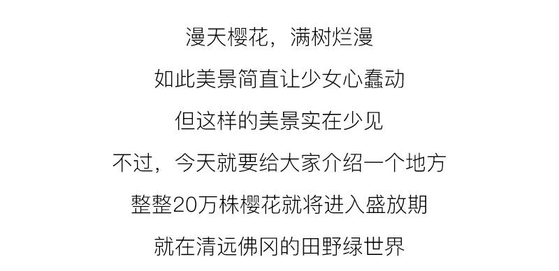 (3)【春节路线】清远佛冈田野绿世界樱花摄影休闲一日游-户外活动图-驼铃网
