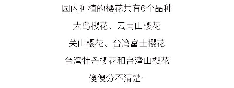 (14)【春节路线】清远佛冈田野绿世界樱花摄影休闲一日游-户外活动图-驼铃网