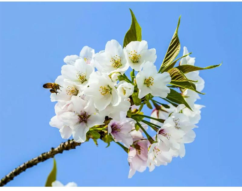 (18)【春节路线】清远佛冈田野绿世界樱花摄影休闲一日游-户外活动图-驼铃网