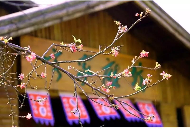 (13)【春节路线】清远佛冈田野绿世界樱花摄影休闲一日游-户外活动图-驼铃网