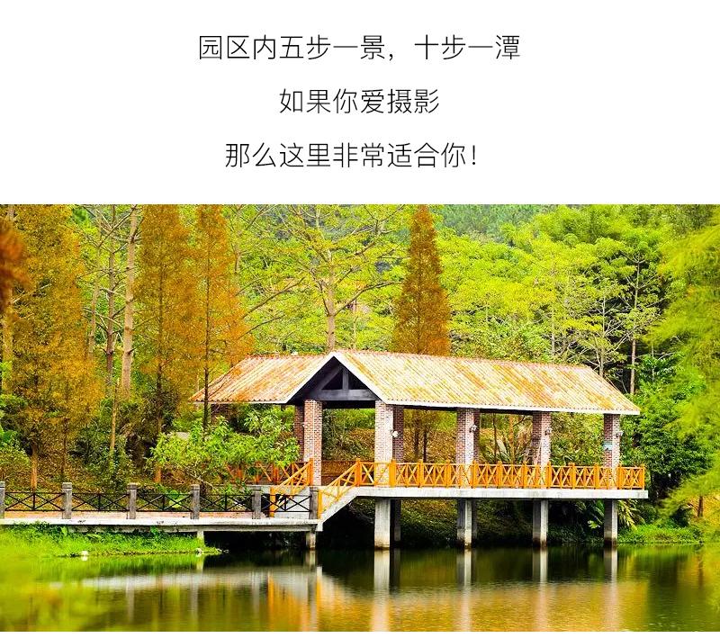 (21)【春节路线】清远佛冈田野绿世界樱花摄影休闲一日游-户外活动图-驼铃网