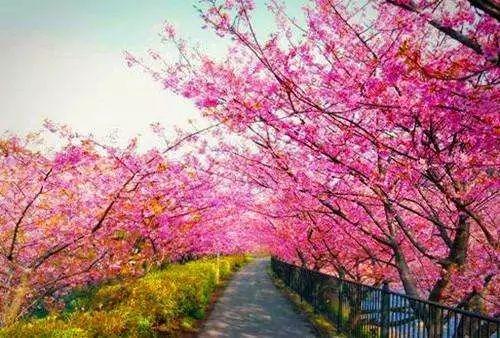 (7)2月17日(初二春节假期)从化天适樱花园+莲麻小镇休闲游-户外活动图-驼铃网