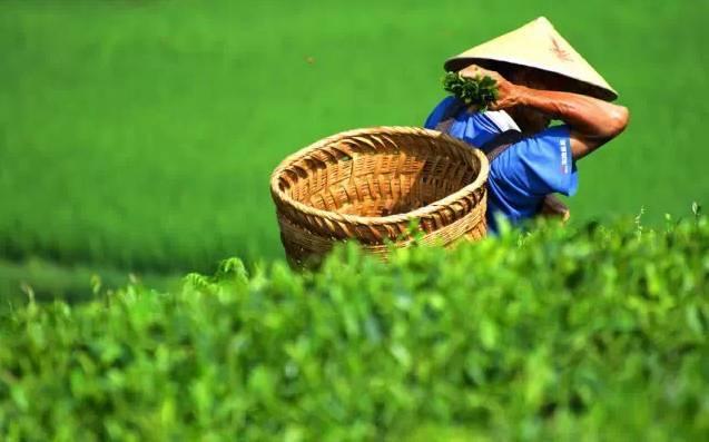 (6)端午6. 16-17  茶海遨游-趣味寻宝、制茶小体验、巡游地下河探究喀斯特地貌-户外活动图-驼铃网