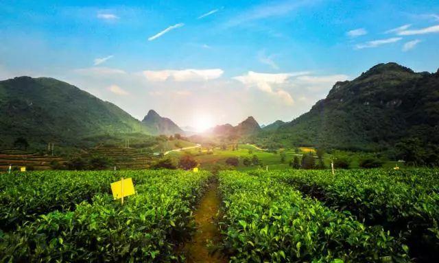 (16)旅拍英德丨6.30 每周六出发,探秘广东最野趣溪谷,行摄中国最美茶谷-户外活动图-驼铃网