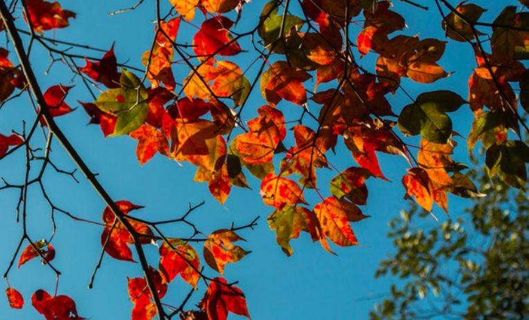 (5)【登山活动】10月7日,秋高气爽千米峰,登增城第一高峰牛牯嶂。-户外活动图-驼铃网