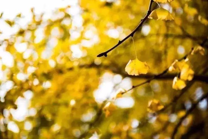 (13)【百亩银杏】11月17日/18日  访阳山小江山水杏乡·赏茶山村罗汉塘银杏-户外活动图-驼铃网