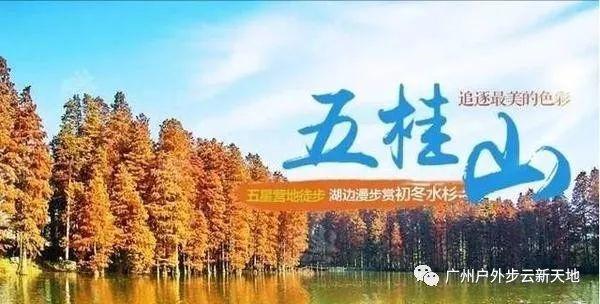 (1)【徒步开炉】1月13日徒步中山五桂山西坑尾赏金色水杉-户外活动图-驼铃网