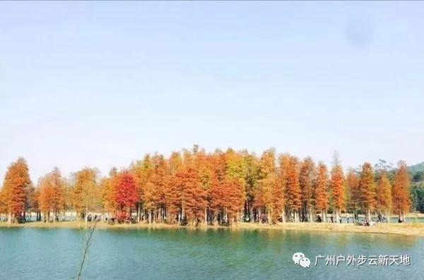 (3)【徒步开炉】1月13日徒步中山五桂山西坑尾赏金色水杉-户外活动图-驼铃网