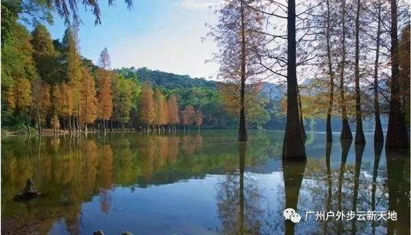 (7)【徒步开炉】1月13日徒步中山五桂山西坑尾赏金色水杉-户外活动图-驼铃网
