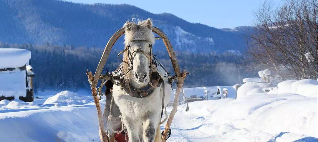 (21)【冰雪童话】亲子专线 哈尔滨-俄式风情伏尔加庄园-亚布力滑雪-雪乡穿越森林-镜泊湖冰瀑-冬捕-虎园6日-户外活动图-驼铃网