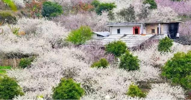 (7)【梁化赏梅】每周六日出发,看天然画卷享大自然魅力-户外活动图-驼铃网