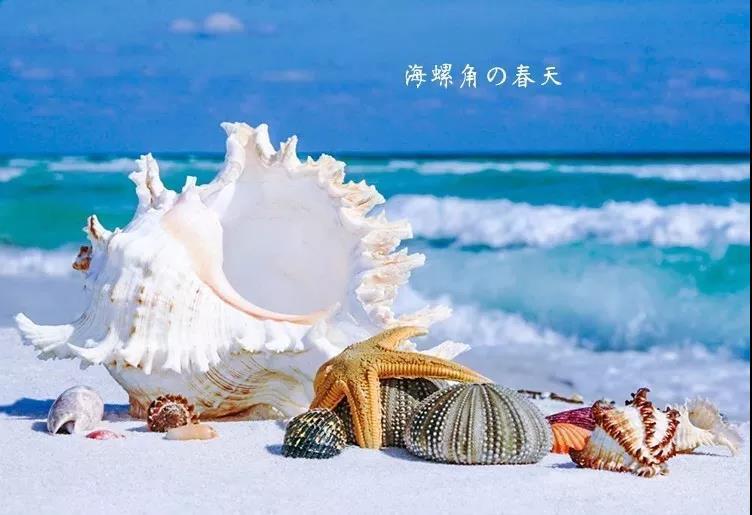 (1)【2.23/2.24 两期 海岸线】捡海螺,钻石洞,穿越海螺角,最美浅海戏水-户外活动图-驼铃网