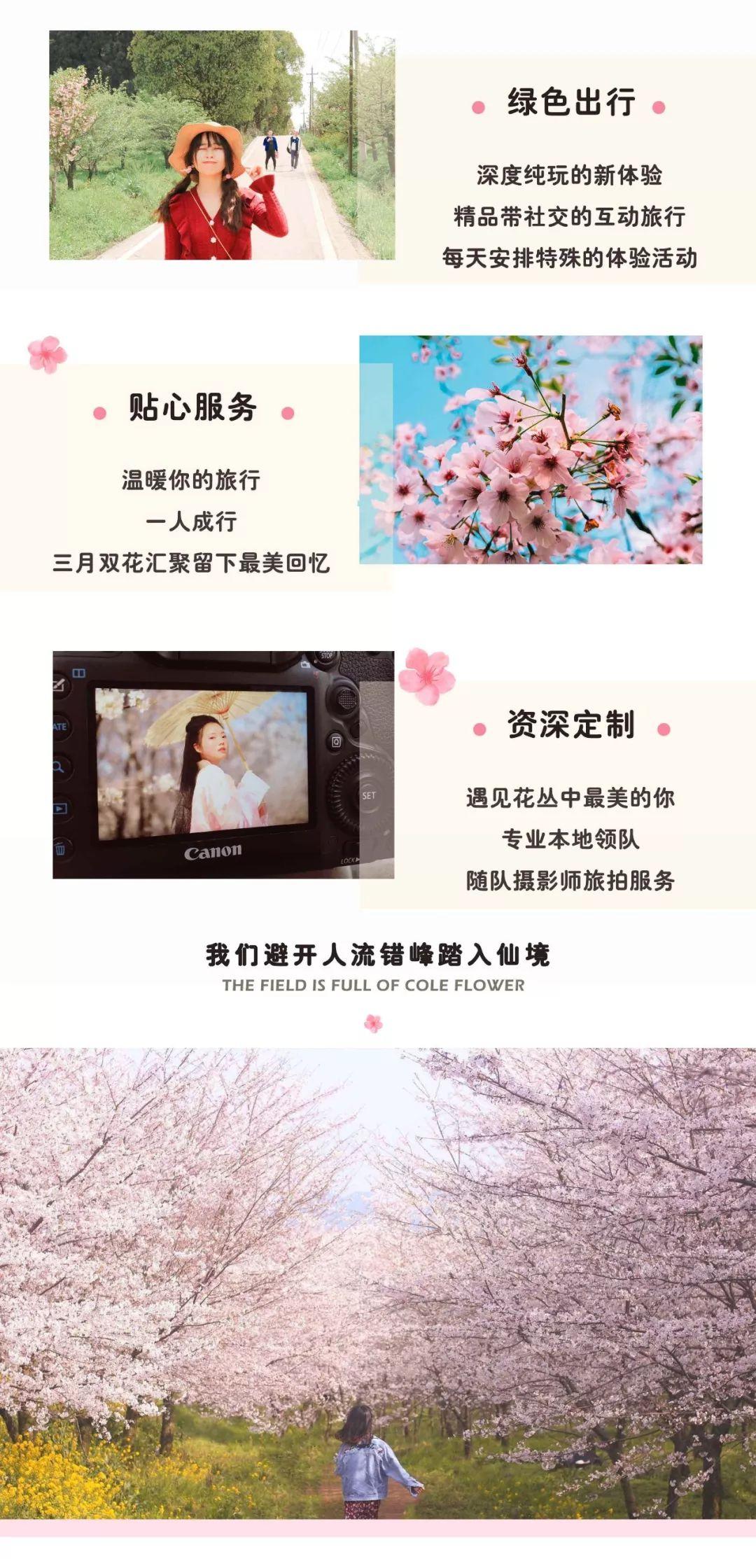 (2)2020年【遇见.樱花-花季贵州】-户外活动图-驼铃网