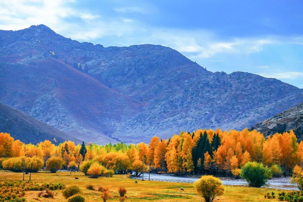 (19)2020新疆是个好地方    绝摄金秋—喀纳斯赏秋8日深度游-户外活动图-驼铃网
