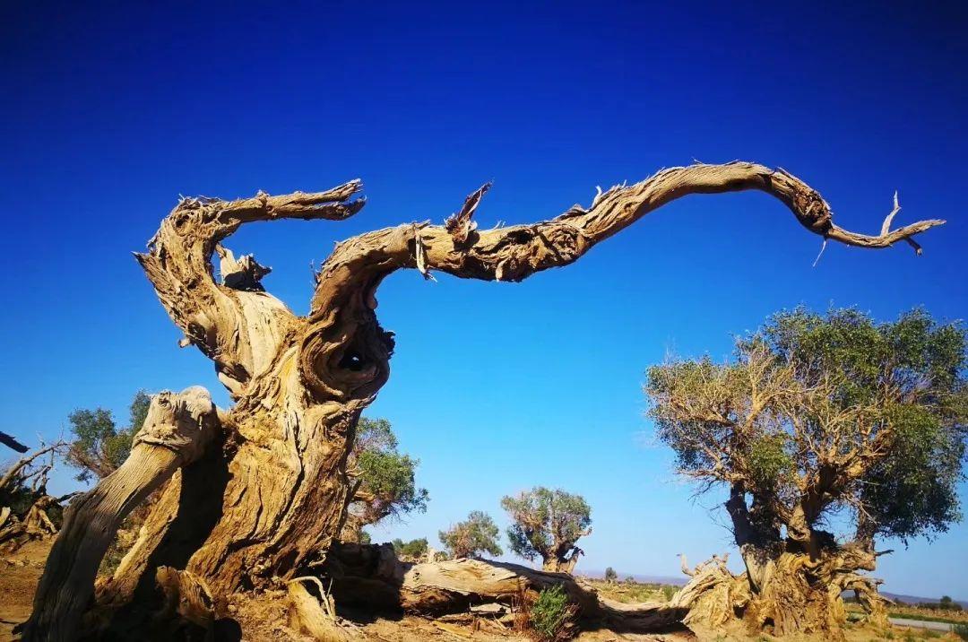 (4)2020新疆是个好地方    绝色风光—喀纳斯8日深度游-户外活动图-驼铃网