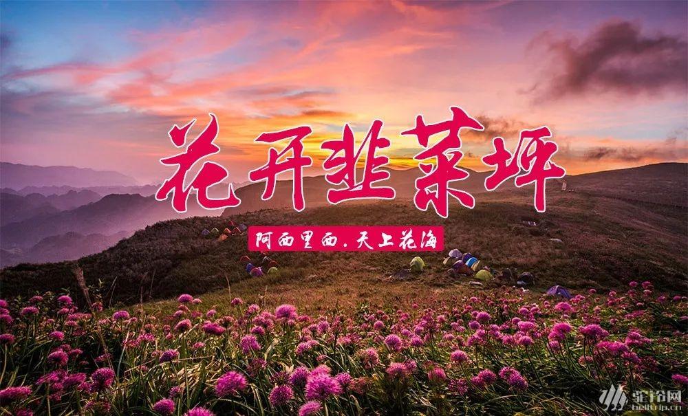 (2)云上花海—贵州之巅五日行摄-户外活动图-驼铃网