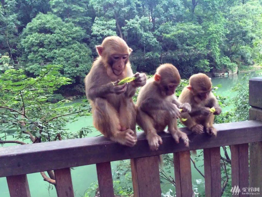 (33)云上花海—贵州之巅五日行摄-户外活动图-驼铃网