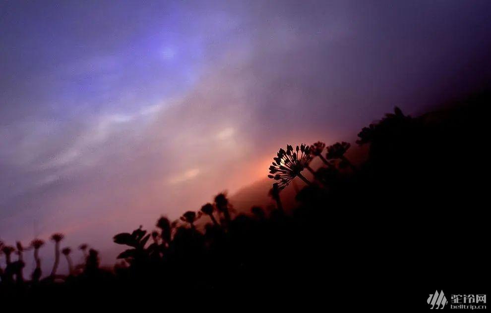 (40)云上花海—贵州之巅五日行摄-户外活动图-驼铃网