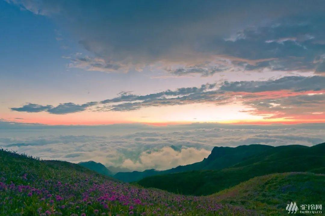 (11)云上花海—贵州之巅五日行摄-户外活动图-驼铃网