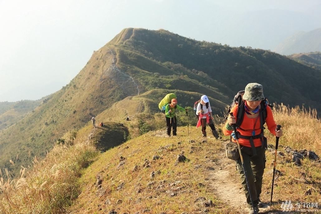 (7)惠州大南山大草坡穿越、满山遍野芦苇荡下摄影、云中漫步斧头石、-户外活动图-驼铃网