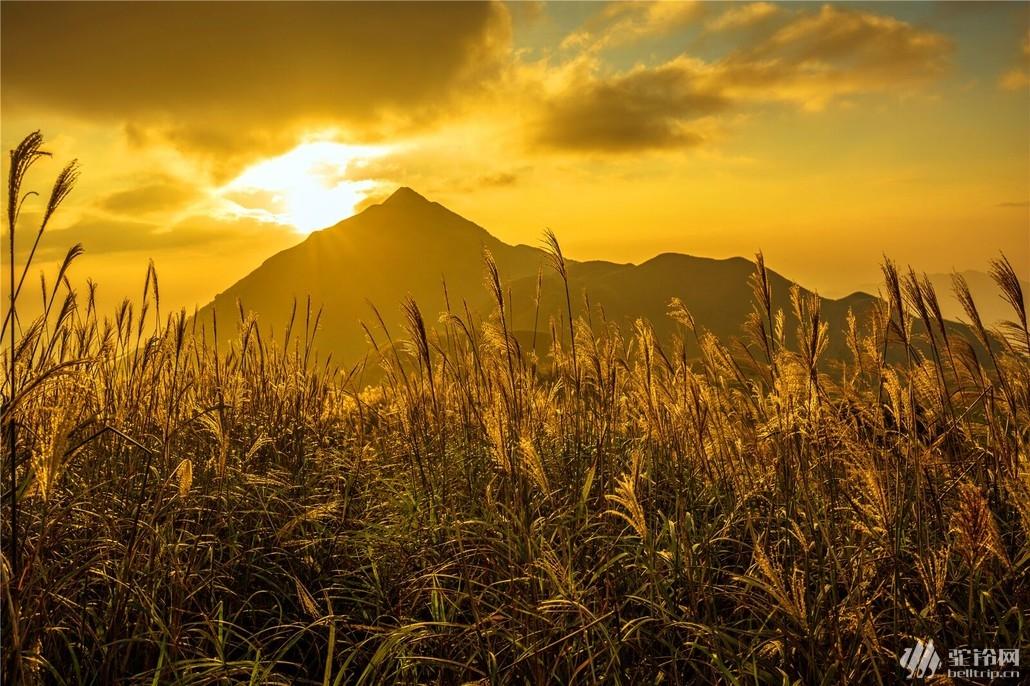 (13)惠州大南山大草坡穿越、满山遍野芦苇荡下摄影、云中漫步斧头石、-户外活动图-驼铃网