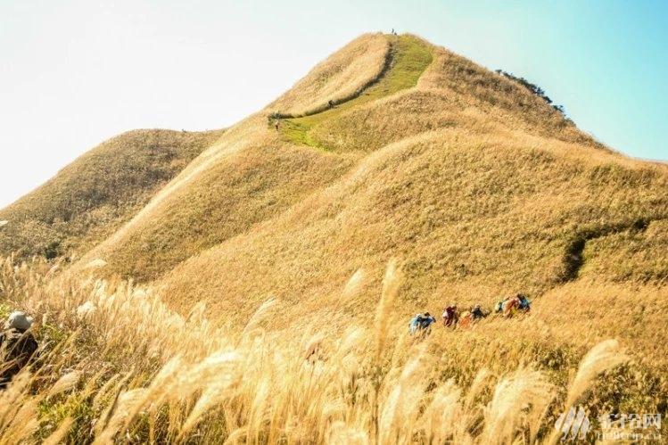 (18)惠州大南山大草坡穿越、满山遍野芦苇荡下摄影、云中漫步斧头石、-户外活动图-驼铃网