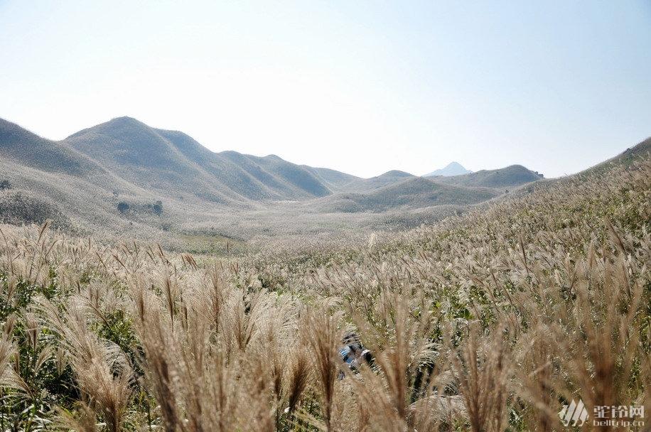 (5)惠州大南山大草坡穿越、满山遍野芦苇荡下摄影、云中漫步斧头石、-户外活动图-驼铃网