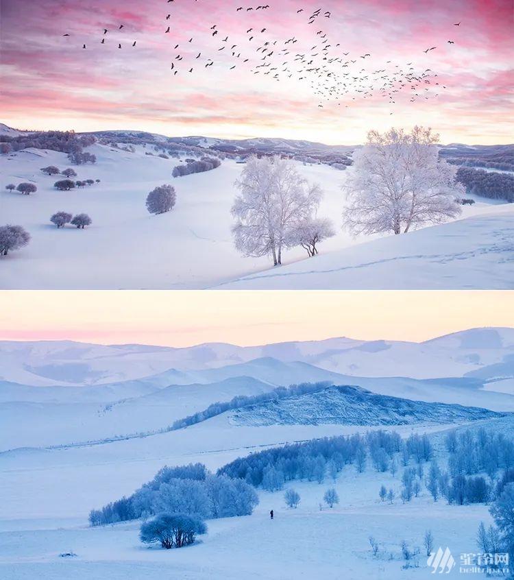 (15)塞北雪国 | 坝上雪原 一号风景大道 冬奥滑雪小镇 暖水魔界 达里诺尔冬捕 热河行宫 八天行摄穿越雪原深度体验之旅-户外活动图-驼铃网
