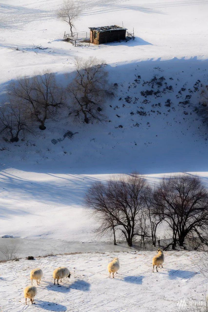 (14)塞北雪国 | 坝上雪原 一号风景大道 冬奥滑雪小镇 暖水魔界 达里诺尔冬捕 热河行宫 八天行摄穿越雪原深度体验之旅-户外活动图-驼铃网