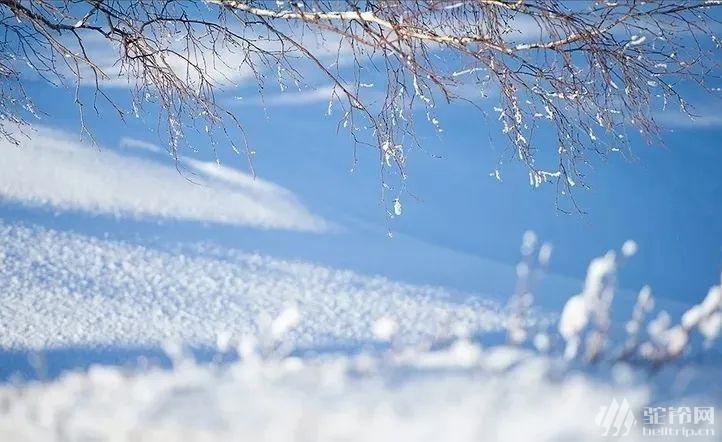 (37)塞北雪国 | 坝上雪原 一号风景大道 冬奥滑雪小镇 暖水魔界 达里诺尔冬捕 热河行宫 八天行摄穿越雪原深度体验之旅-户外活动图-驼铃网