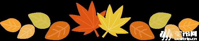 (2)特价69元 会员39元 11月29日赏粤北醉美百亩银杏林、千年银杏树,这个秋天邀您走进粤北最美银杏村出-户外活动图-驼铃网