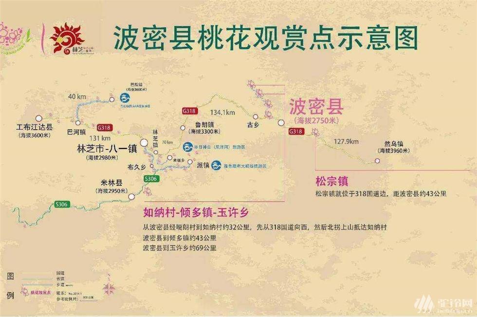 (3)林芝桃花行-户外活动图-驼铃网